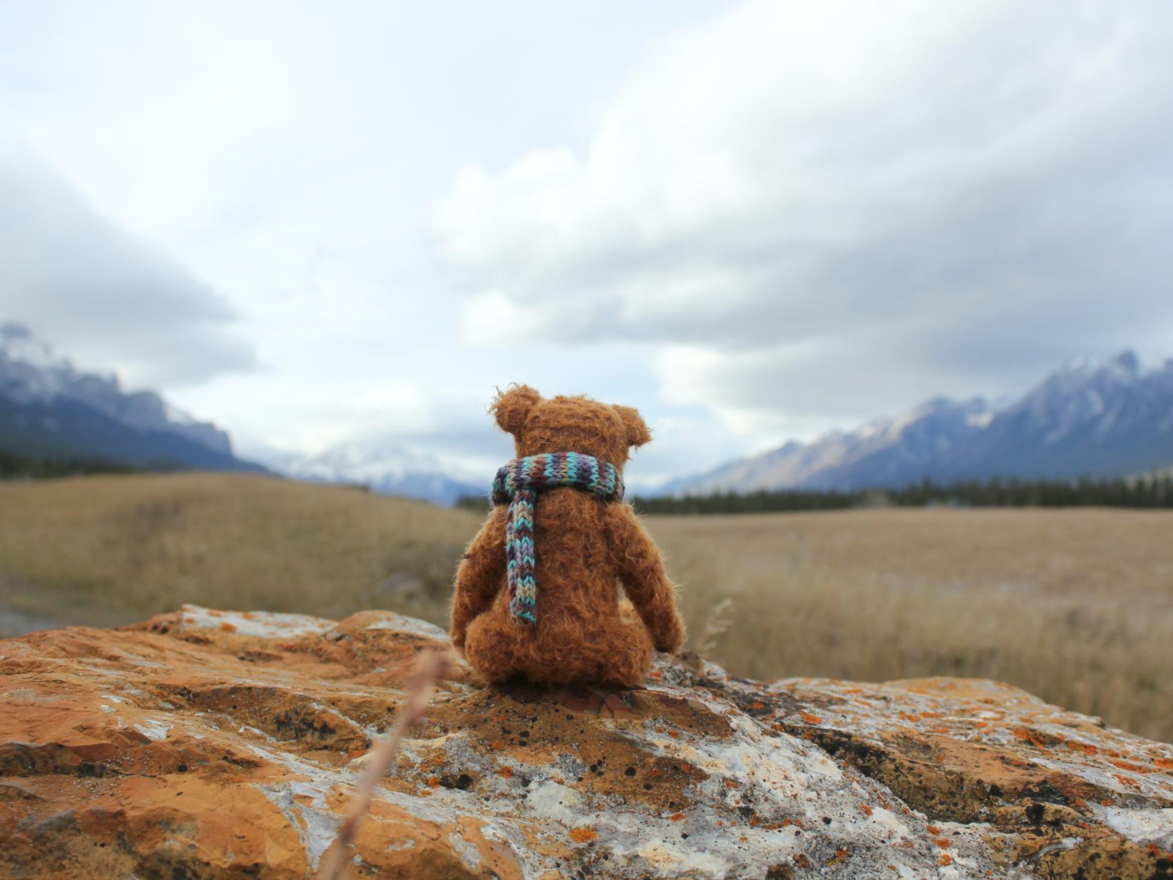 Teddy (c) https://www.instagram.com/kjesommerfreizeit/