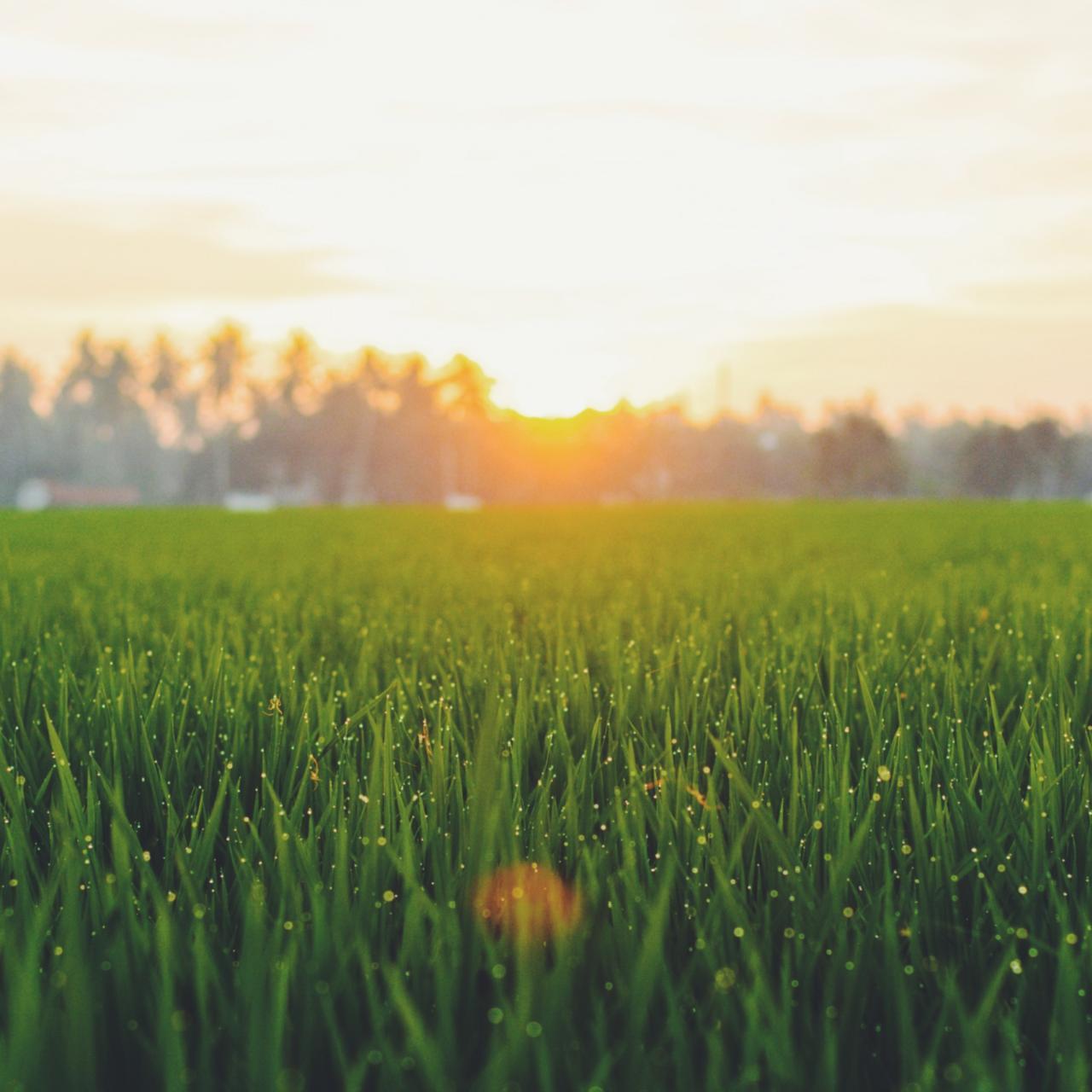 Gras mit Holzhaus